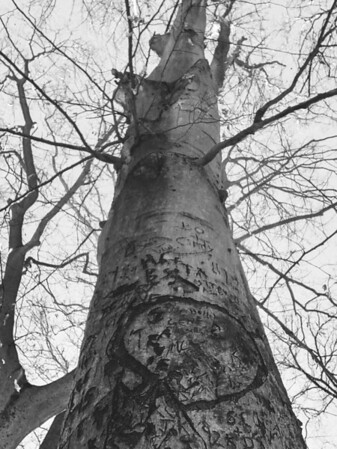 Carvings in a tree along Trail #4