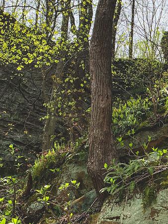 Greenery on the Rocks