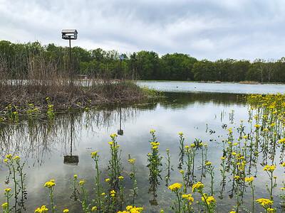 Some color along Fowler Lake