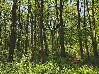 Green Forest along Trail 3