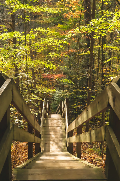 A Long Staircase into the Preserve