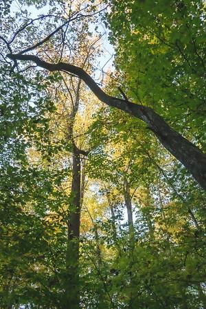 Beautiful Fall Trees