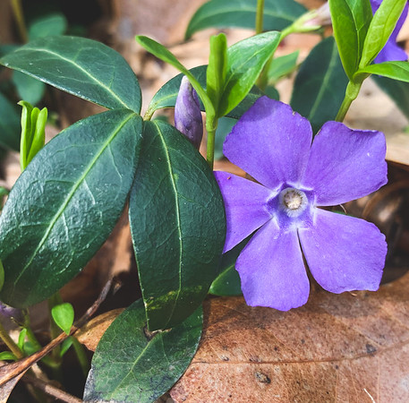 Periwinkle- Last one! (for now)