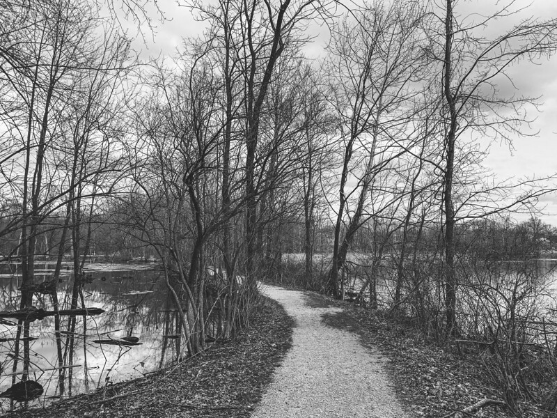 The Trail between the Lake and Wetland Area
