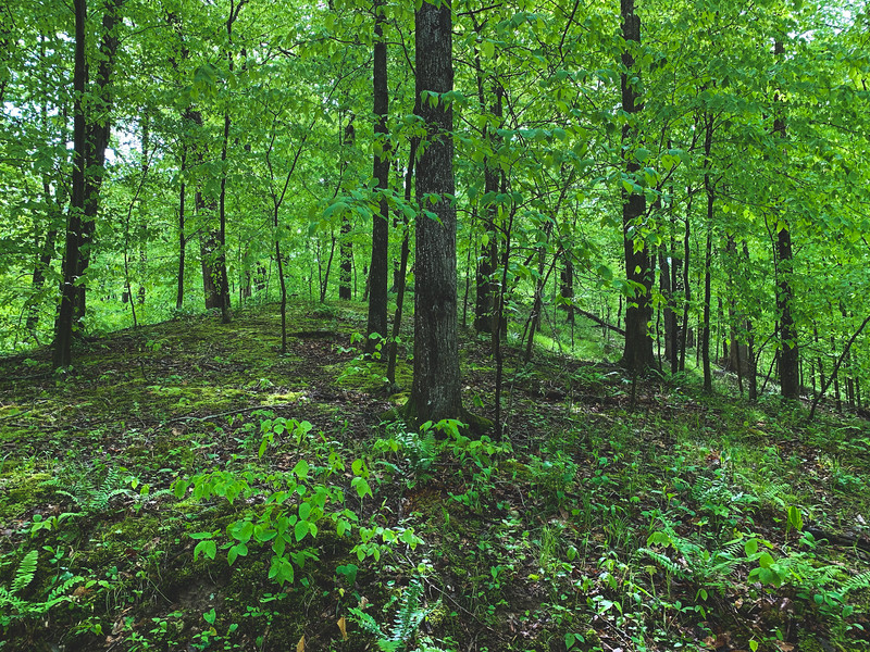 The American Beech Woods Nature Preserve Forest