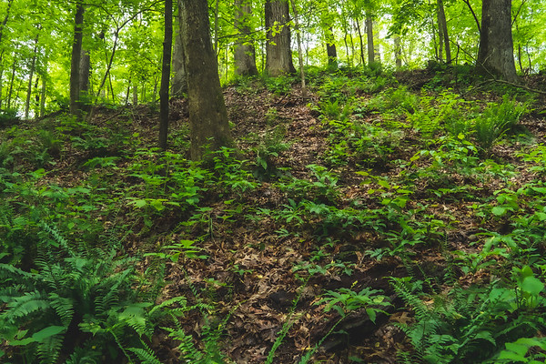 Greenery along the hillside!