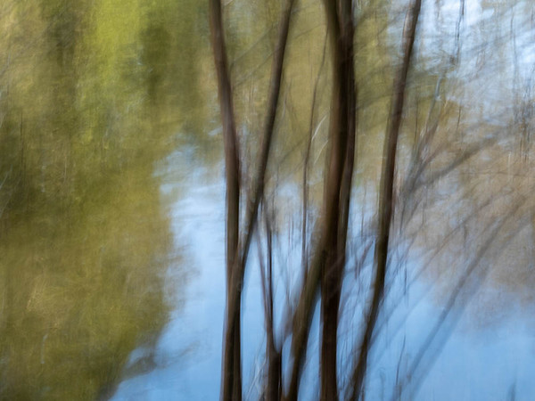 Trees and the Brague