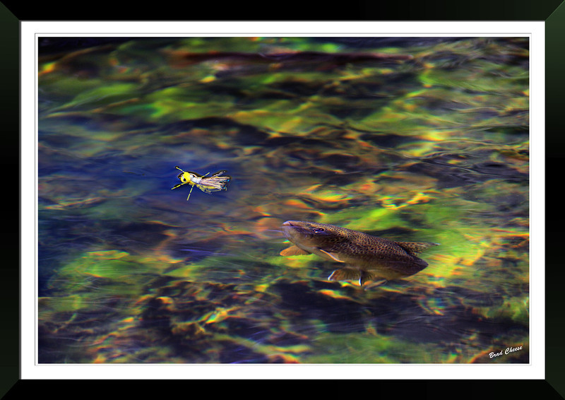 Brown Trout and Chernobyl Ant