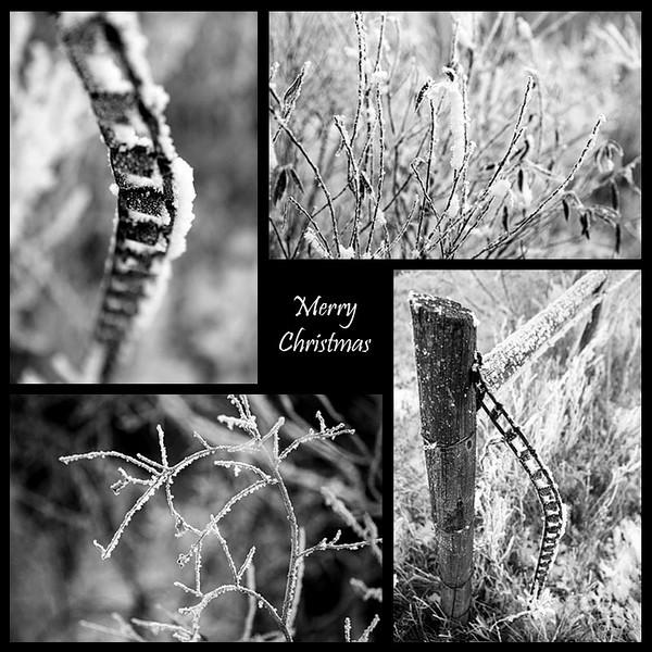 hoar_frost_web