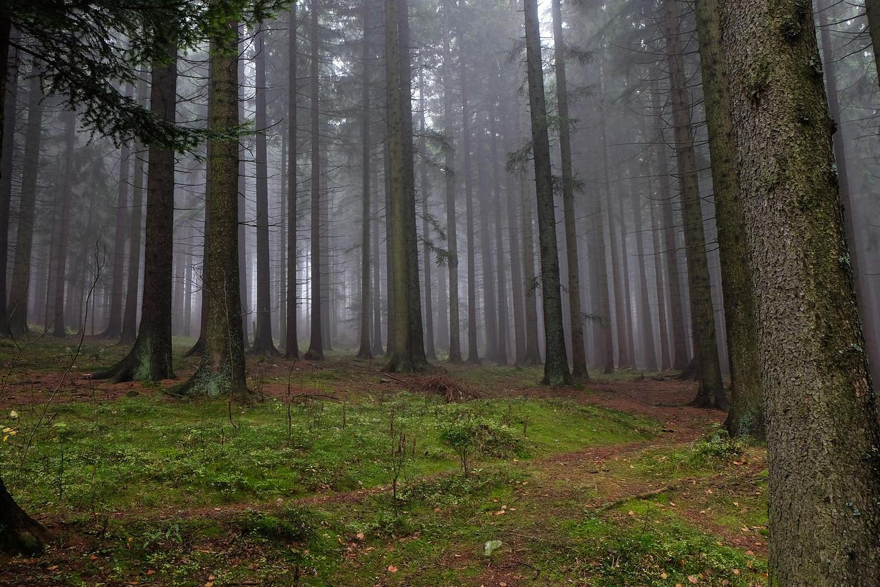 October: misty forest near Kasperk Castle, Czech Republic