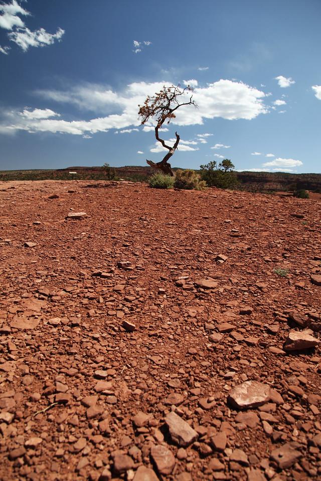 June: A lone tree in Capitol Reef National Park, Utah
