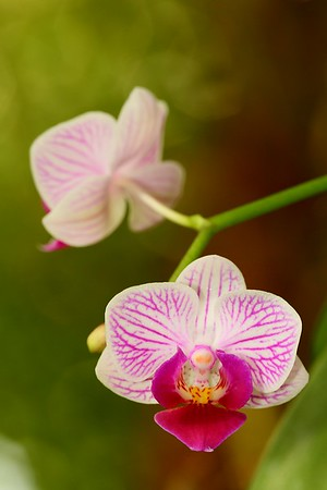 Orchid lit by flash with natural background.