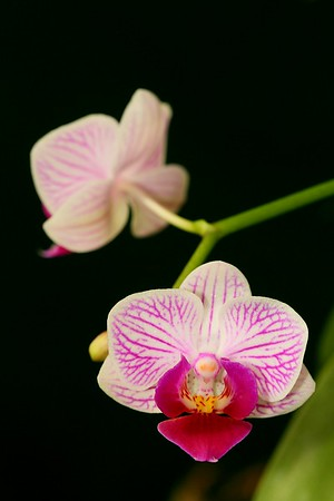 Orchid lit by flash with 5-in-1 customized photo disc dark green fabric side as background.