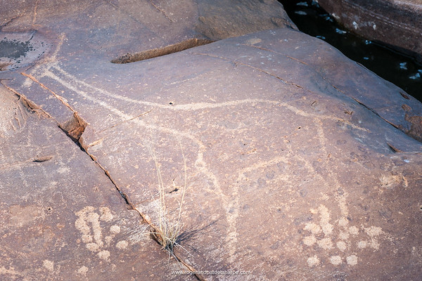 San or Bushman Petroglyph (rock engraving) of a South African giraffe or Cape giraffe (Giraffa giraffa giraffa). Northern Cape. South Africa.