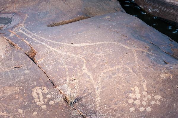 San or Bushman Petroglyph (rock engraving) of a South African giraffe or Cape giraffe (Giraffa giraffa giraffa). Northern Cape. South Africa.