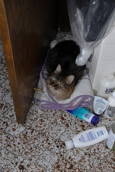 Ripley Hiding From the Rain