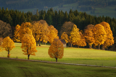 Autumn colors at their best. The colors are the most beautiful just before the leaves fall down from the trees. The last light of the day creates a nice and warm glow. This photo was made in Austria, which is a great country to visit in October to witness the beautiful autumn colors. Most of the time I shoot around sunrise but this photo is an exception and was made at sunset.