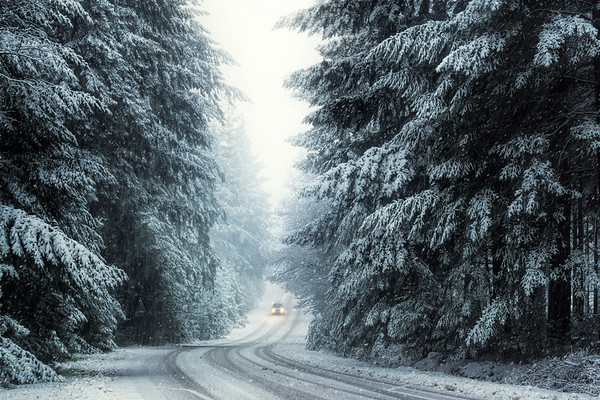 We don't have snow in the Netherlands very often. In December 2017 we had some snow that turned this forest into a magical winter wonderland. In case of snow, pine trees are great to photograph, as pines can hold more snow on their branches and trunks than deciduous trees that lost all their foliage. The car on the road maybe me remember a Christmas song: driving home for Christmas.