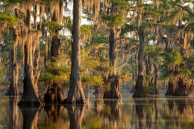 This photo was made in one of the many swamps of the USA. It was extremely hot when I was there and only around sunrise and sunset the temperature was comfortable enough to go on the lake. Floating in a canoe through the cypress tree of the swamps at sunrise while hearing the sound of crickets and seeing birds such as the great egret, the great blue heron and the southern bald eagle makes you feel connected to nature again and it makes you feel recharged.