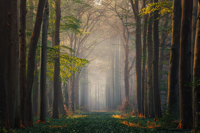 Autumn is the season with the highest chance to get fog. Fog creates a special mood and makes the forests look even more beautiful. This photo I took while my friend Ning from China was in the Netherlands to shoot the Dutch forests. My photo buddy Edwin Mooijaart was also with us. We were lucky that that day there was fog that was present for quite a long time and that we could make many beautiful autumn photos.