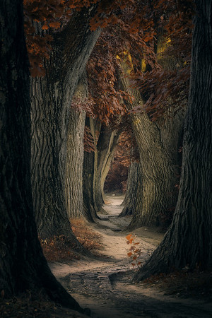 This photo I made in 2019, while travelling from the Netherlands to Austria. This avenue is one of the most beautiful ones that I have ever seen. In 2019 there was a beaver damaging these old trees. The trees are now protected against the beaver, so hopefully we can enjoy these trees many more years.