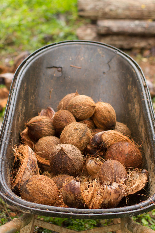 Coconuts :)