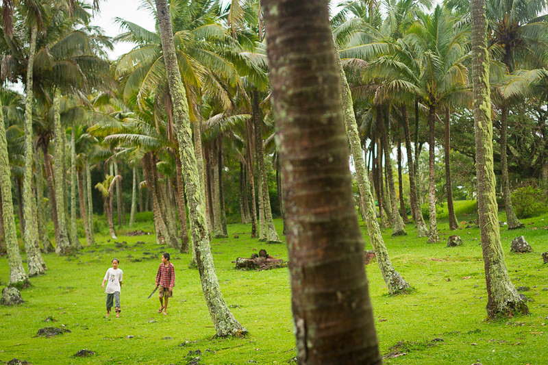 No shortage of coconut trees here.