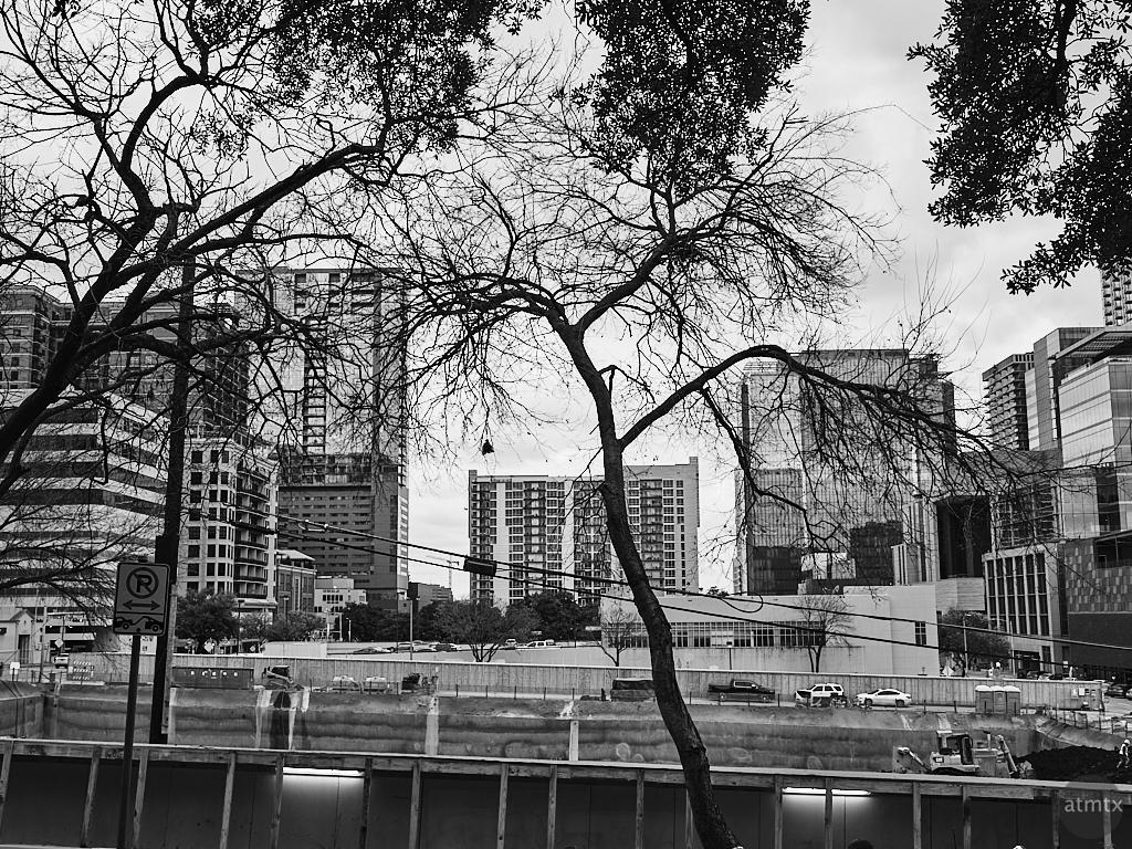 Trees and Skyline - Austin, Texas