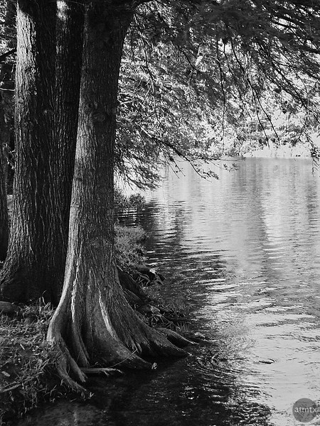Tree and Creek - Austin, Texas