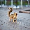 Inquisitive Squirrel, University of Texas - Austin, Texas
