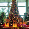 Christmas Tree, Changi Airport - Singapore
