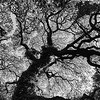 Abstract Tree - Austin, Texas