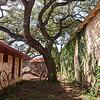 Elegant Tree - Dripping Springs, Texas