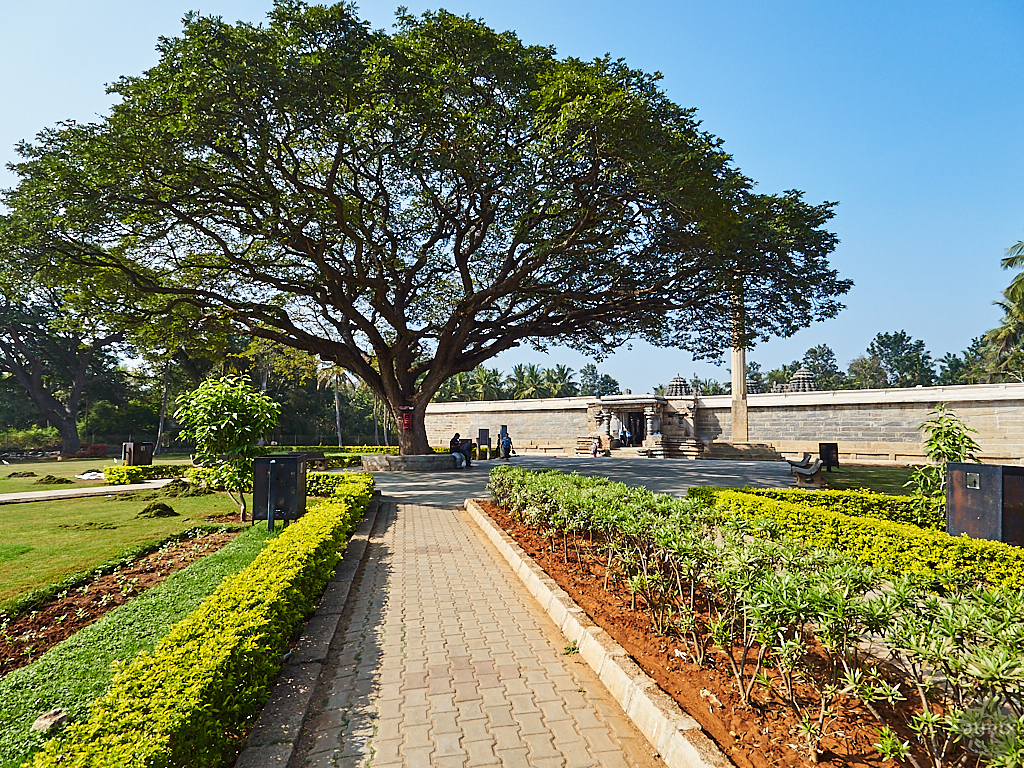 A Grand Tree - Somanathapura, India