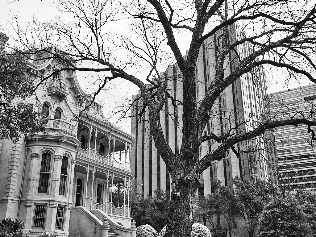 Tree and Architecture - Austin, Texas