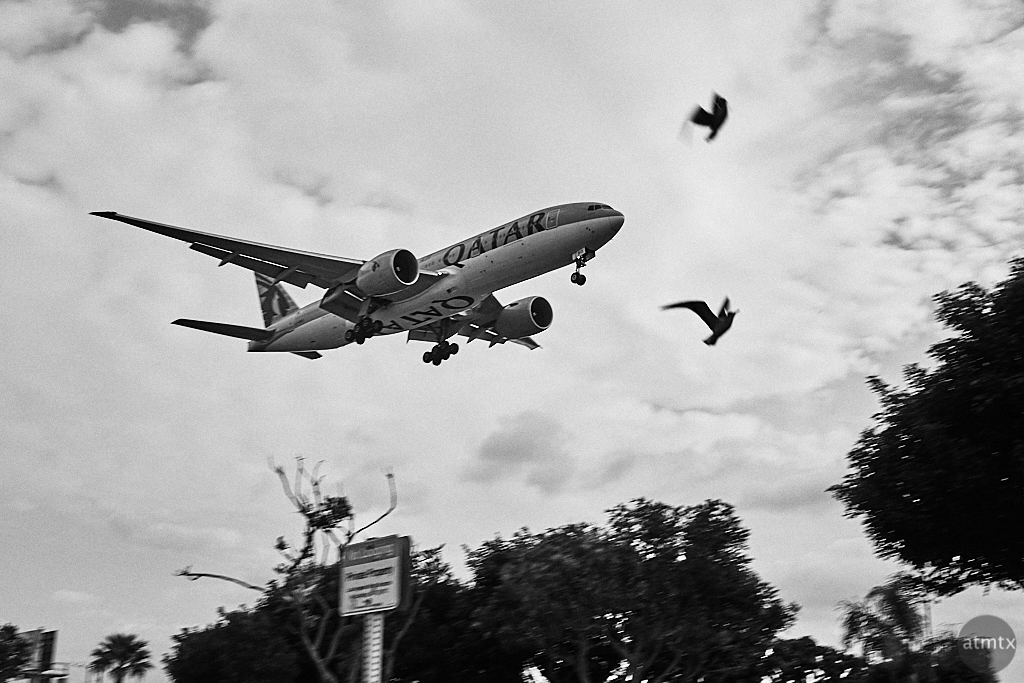 Birds in Flight - Los Angeles, California