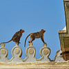 Monkeys in the Wild, Chamundeshwari Temple - Mysore, India