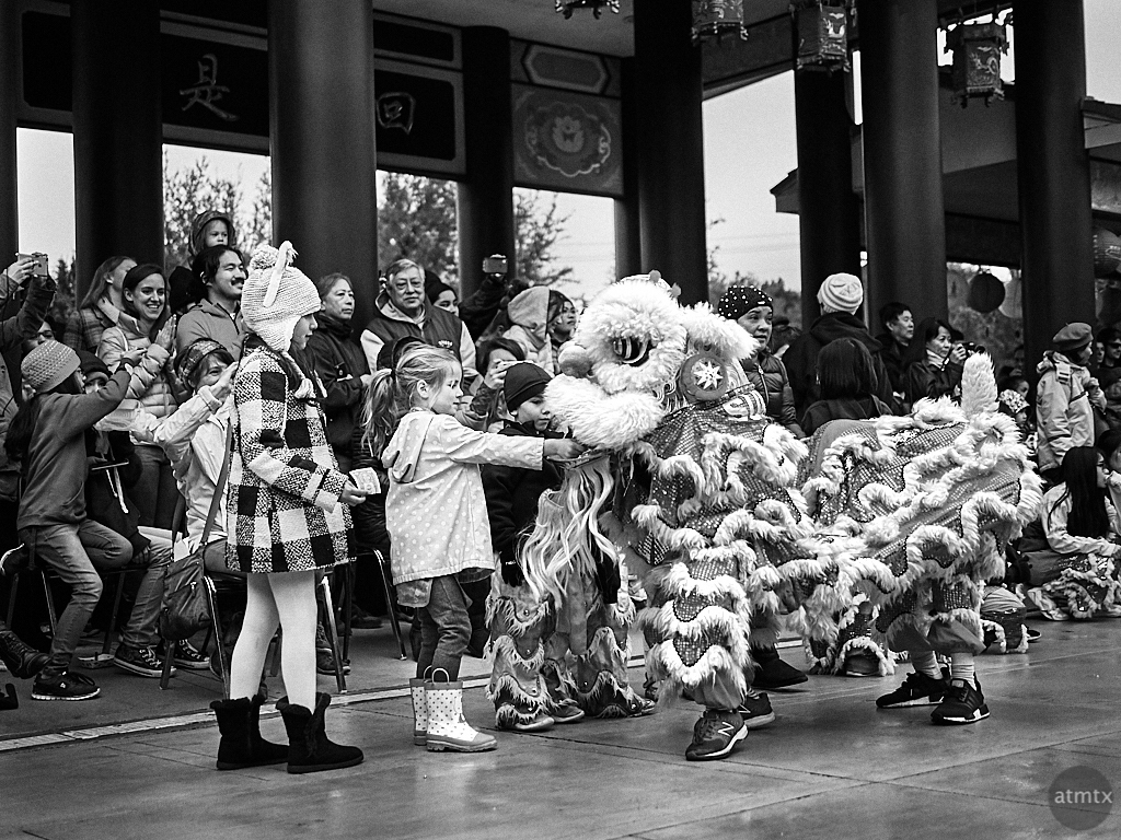 Feeding the Mini Lion, 2019 Chinese New Year - Austin, Texas