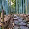 The Bamboo Garden at Hokoku-ji - Kamakura, Japan