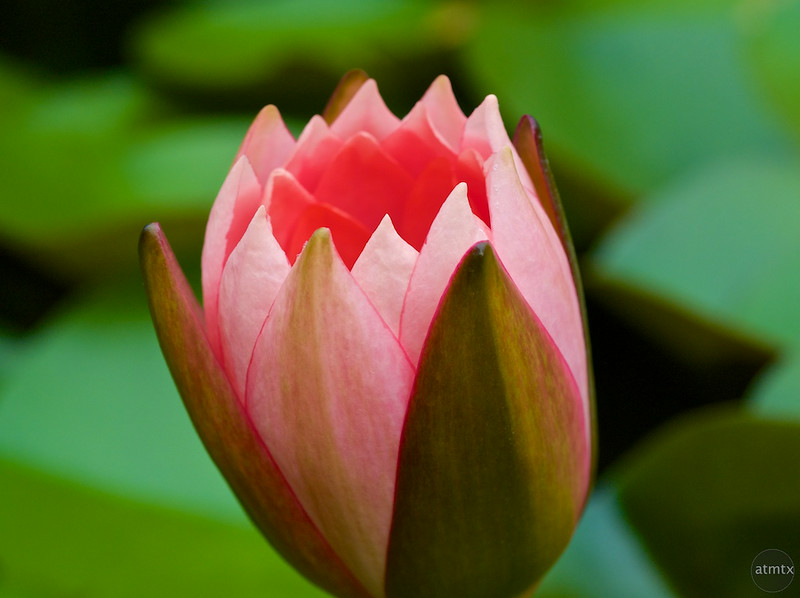 Flower Macro #4, Zilker Botanical Gardens - Austin, Texas