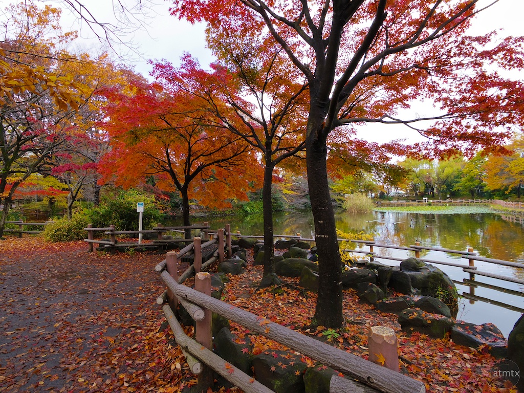 A Neighborhood Park - Yokohama, Japan