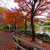 A Neighborhood Park #2 - Yokohama, Japan