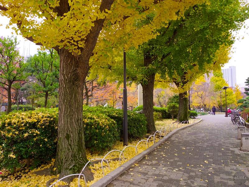 A Neighborhood Park #2 - Tokyo, Japan