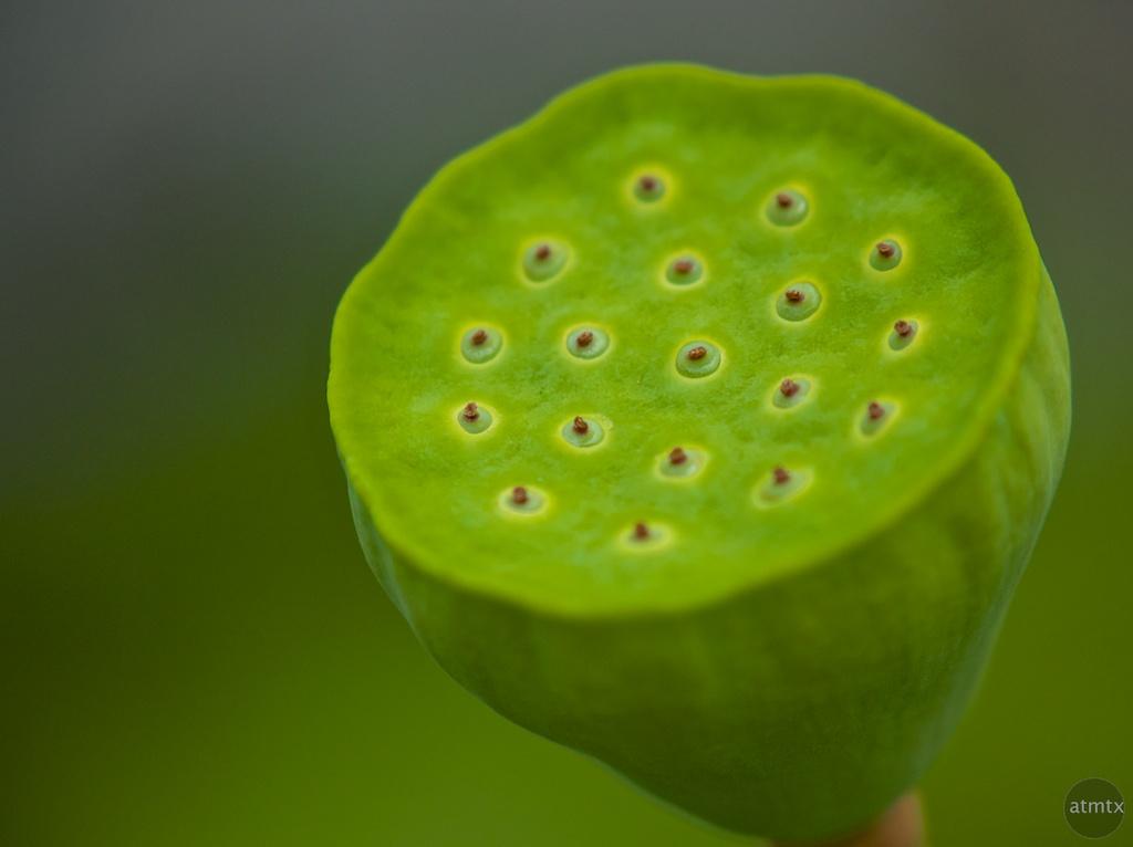 Flower Macro, Zilker Botanical Gardens - Austin, Texas