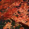 2014 Rikugien Garden Fall Color #2 - Tokyo, Japan