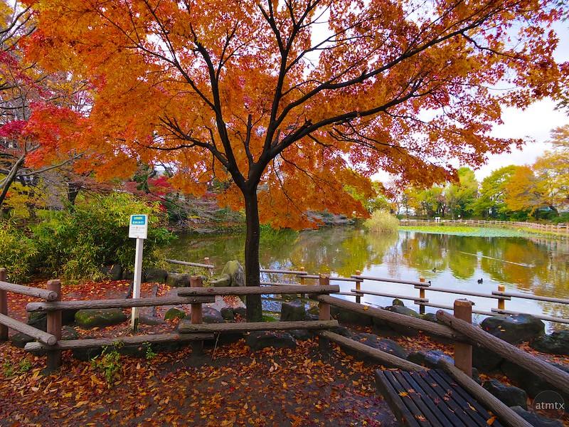 A Neighborhood Park #3 - Yokohama, Japan