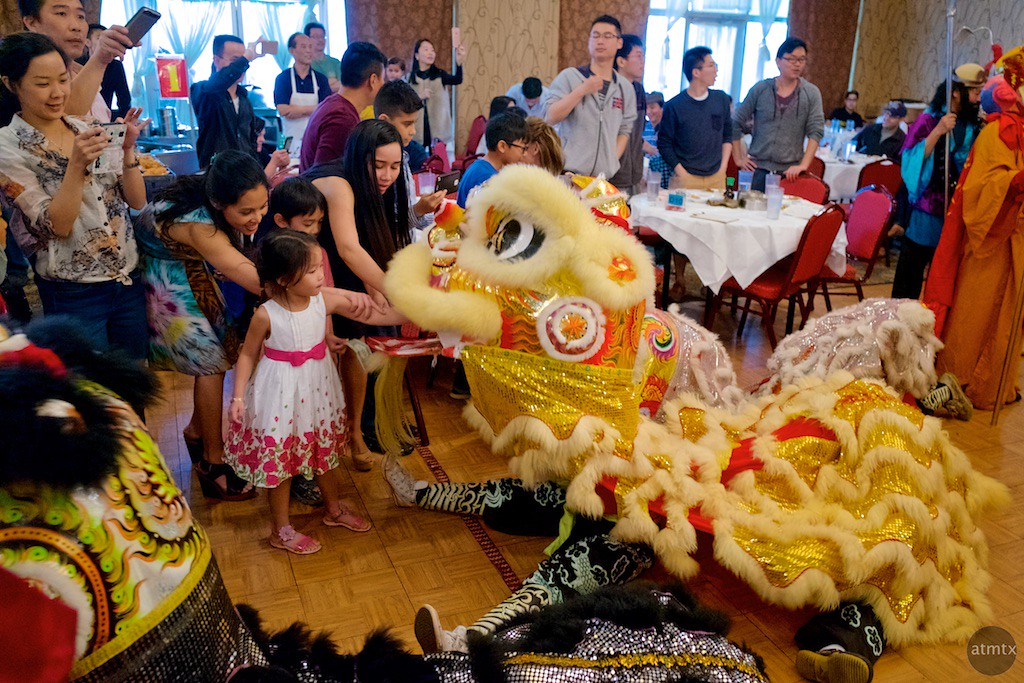 Feeding the Lion, 2016 Chinese New Year Celebration - Austin, Texas