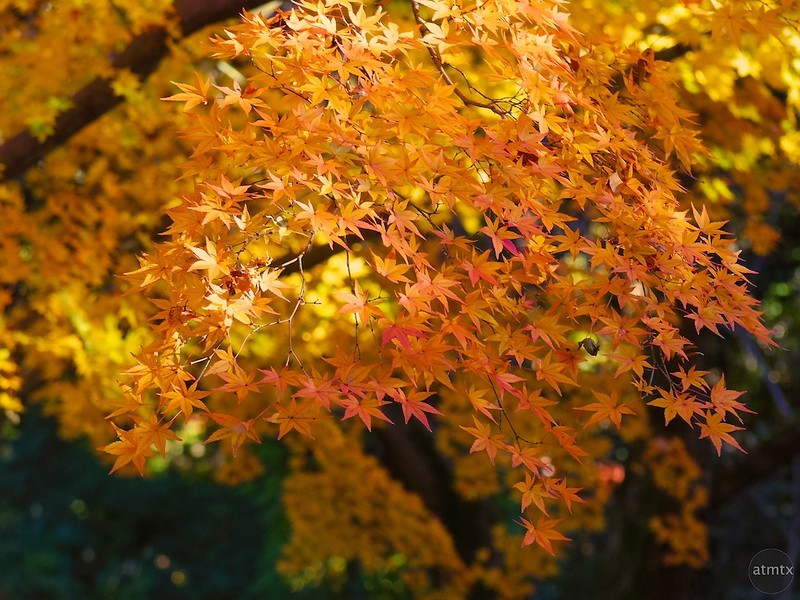 2014 Rikugien Garden Fall Color #5 - Tokyo, Japan