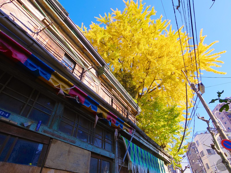 The Old House and the Tree - Tokyo, Japan