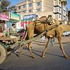 Camel Cart - Agra, India